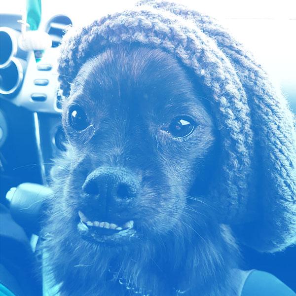Milo, Copywriter at Ontario SEO